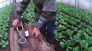 getlinkyoutube.com-приспособление ножницы для высадки рассады