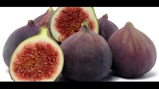 getlinkyoutube.com-HOW TO GROW FIGS IN A CONTAINER OR POT