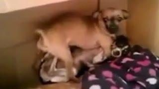 getlinkyoutube.com-交尾を覗かれた犬がガチギレ!!Twitterで話題のおもしろ動画まとめ
