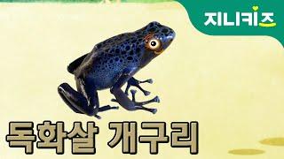 getlinkyoutube.com-독화살 개구리(Poison Arrow Frog) | 지구에서 가장 강한 독 | 생생자연도감 | 어린이 자연관찰 Kids Science | 과학동화
