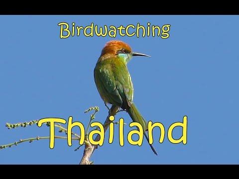 Birdwatching Thailand ~ Chiang Mai