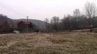 getlinkyoutube.com-Femeie atacata de  cerb (Dobarlau,Covasna)