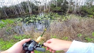 Roadside Canal Fishing in The Everglades