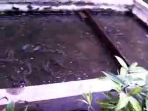 Lomba Mancing ~ Ikan Lele Terbesar