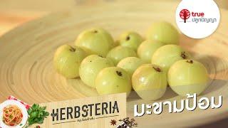Herbsteria สมุนไพรเข้าเส้น : มะขามป้อม