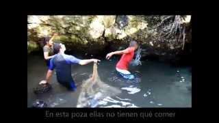 DREFF - Rescate de tortugas en la Laguna Gri Gri (Video Cortesía de Omar Reynoso)