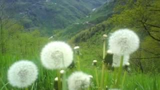 Pervane Köyü Yaz Manzaraları