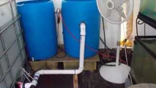 getlinkyoutube.com-Tilapia - Filter System Details