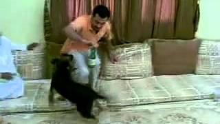 getlinkyoutube.com-شاهد كلب مضحك دخل مجلس 2014