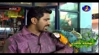 getlinkyoutube.com-Documentary on Ornamental fishes, Exotic Birds and Fancy Pigeons Part 1