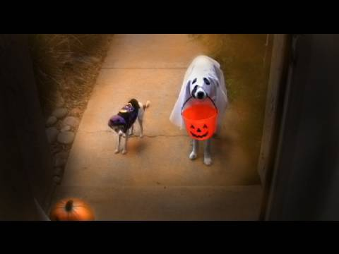 Trick or Treat? - Funny Dogs Halloween Dog Tricks
