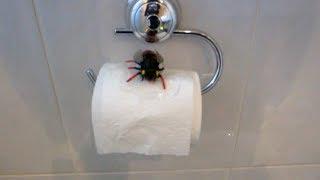getlinkyoutube.com-صرصار كبير في الحمام!؟
