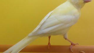 علاج الخوف والصدمة عند الطيور