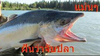 getlinkyoutube.com-ฝันเห็นปลา ฝันว่าได้จับปลา   เห็นปลาว่ายน้ำ   (เลขเสี่ยงโชค)