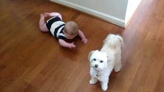 getlinkyoutube.com-Dancing Dog Laughing Baby
