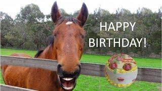 getlinkyoutube.com-FUNNY HORSE Singing Happy Birthday