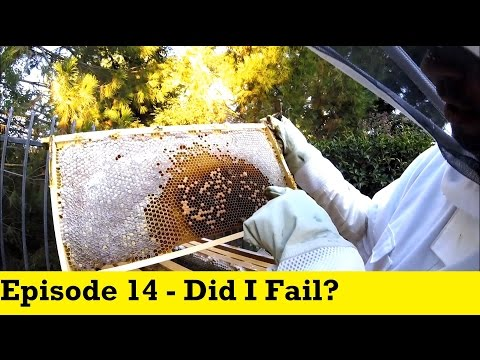 Flow Hive - Episode 14 - Did I Fail?