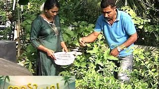 സസ്യമൈത്രി പൊലീസ് Rooftop cultivation in police quarters Manorama News Nattupacha