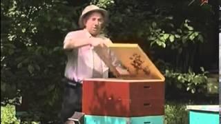 getlinkyoutube.com-Начинающим пчеловодам о главном медосборе.