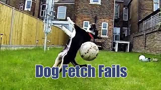 getlinkyoutube.com-Dog Fetch Fails