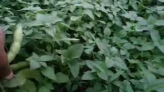 getlinkyoutube.com-زراعه الاسطح في العراق