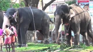 getlinkyoutube.com-Thrissur Pooram 2015 Elephants
