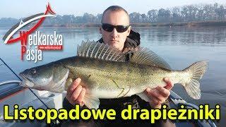 Listopadowe drapieżniki | odc.36 | duży sandacz !! szczupaki | łowienie techniką opadu