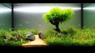 getlinkyoutube.com-Freshwater Planted Aquarium - Fragments Of Memories | 残碎的记忆