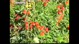 getlinkyoutube.com-Mermon Nadiya _ Afghan Old Song