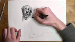 getlinkyoutube.com-Wie man Hunde zeichnet - Video-Tutorial