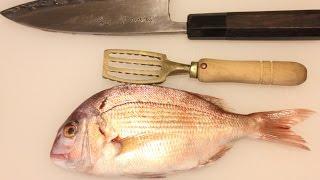 【簡単料理 魚のさばき方】 鯛のさばき方 〜料理を美味しく仕上げる為の下処理編〜 How to clean a red sea bream