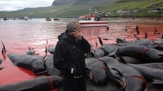 SCUBAVERSE talks with Sea Shepherd about the Whale & Dolphin slaughter in the Faroe Islands
