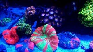 getlinkyoutube.com-Extreme reef tank