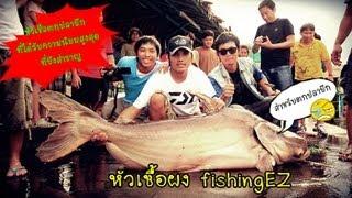 getlinkyoutube.com-หัวเชื้อตกปลาบึก กินทุกเม็ด อัดจนเบื่อ by fishingEZ