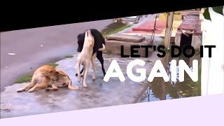 getlinkyoutube.com-Funny Gay Dog Falls Off During Action