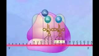getlinkyoutube.com-تركيب البروتين  1