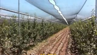 getlinkyoutube.com-Интенсивные фруктовые сады