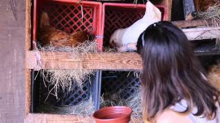 getlinkyoutube.com-How To Raise Chickens - The Benefits of Free-Range Eggs!