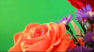 "getlinkyoutube.com-( Real Flowers ) "" free Chroma Key Effects "" ( Flores Reales ) Pantalla verde Green screen   video 1"