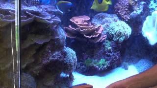 getlinkyoutube.com-Managing Algae Growth  - ReefKeeping Video Podcast by AmericanReef - Start a Saltwater Aquarium