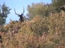 Big Bulls Big Bucks MossBack Hunting Theme song