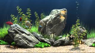 getlinkyoutube.com-Dream Aquarium Virtual Fishtank #1