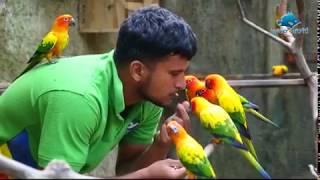 getlinkyoutube.com-Feeding Sun Conure Birds