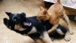 getlinkyoutube.com-Perros Asustados por Gatos - Videos de Risa - Animales - [Nuevo]