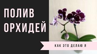 getlinkyoutube.com-Как Я Поливаю Свои Орхидеи