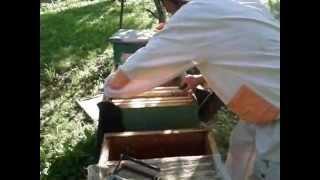 "getlinkyoutube.com-Пчеловодство. ""Налёт на рой"" и деление семьи на ""пол-лёта"""