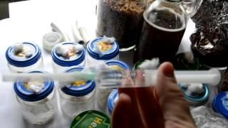 getlinkyoutube.com-Мицелий Как делать мицелий  как делать грибницу, как выглядит грибница