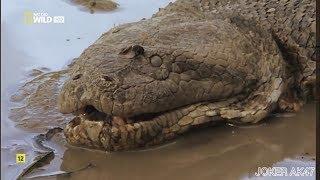 Не может быть! anaconda Анаконда мутант! Самая большая змея какую я только видел! . snak