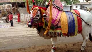getlinkyoutube.com-ongole bulls devotional game show on sankranti festival