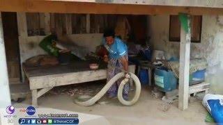 getlinkyoutube.com-จับงูจงอางยักษ์ยาว 5 เมตร